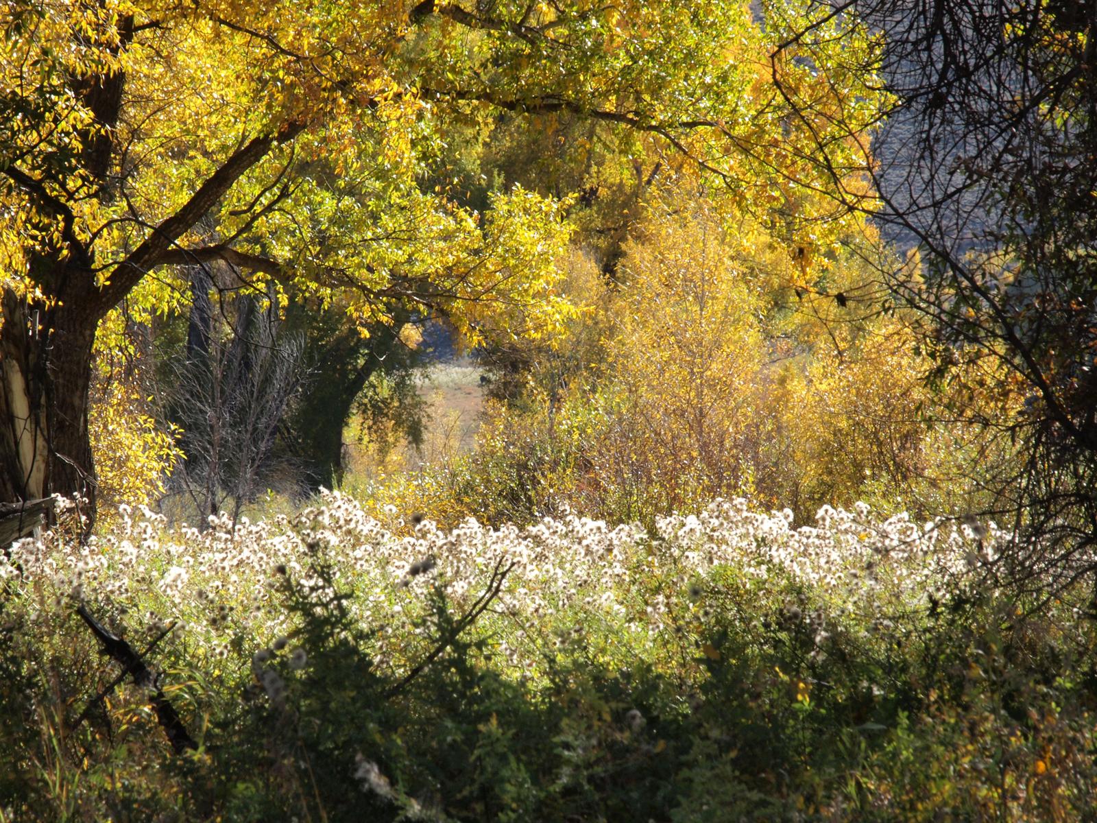 壁纸 风景 森林 桌面 1600_1200